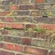 Moosbesatz am Mauerwerk des Ehrenmals greift die Fugen und Steine an